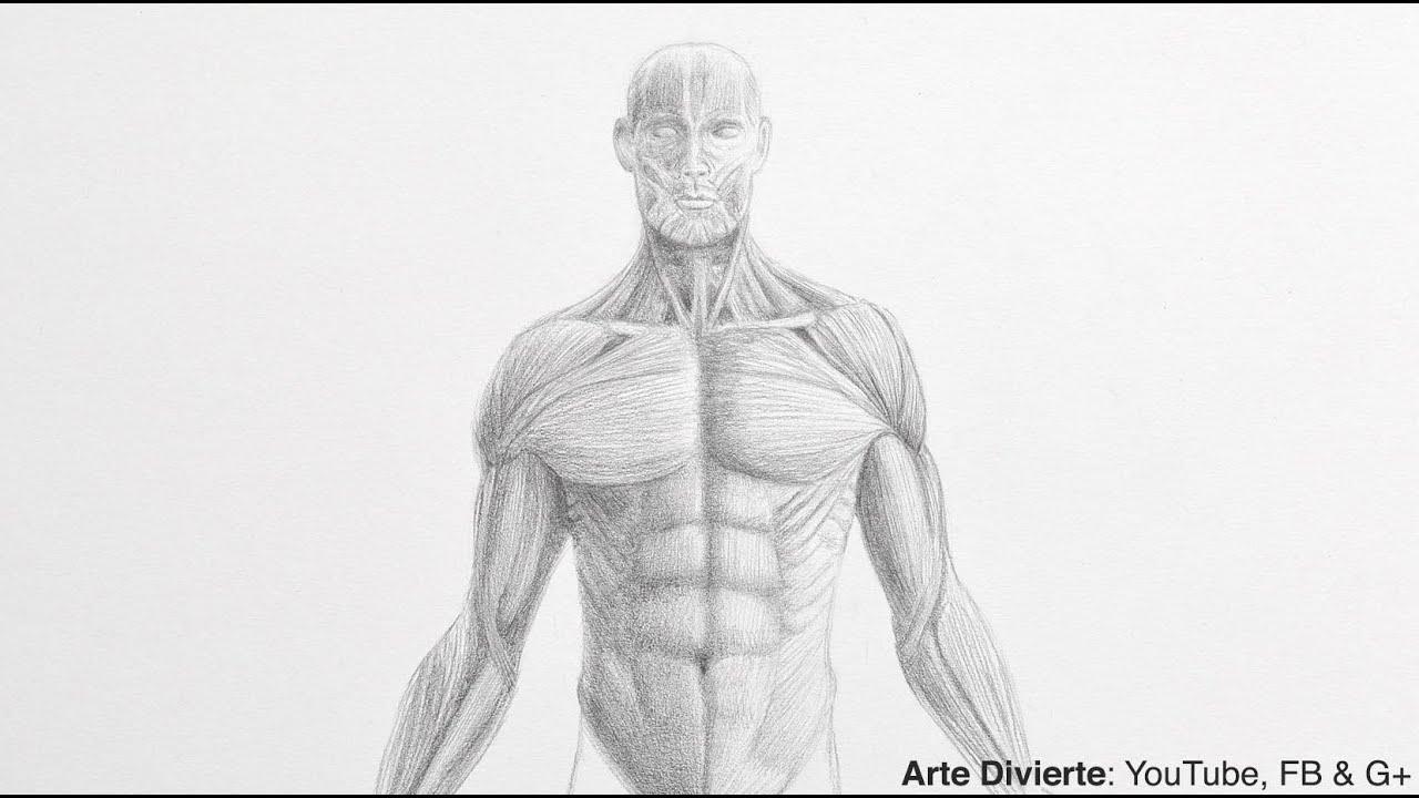 Cómo dibujar un torso - Dibujo anatómico - YouTube