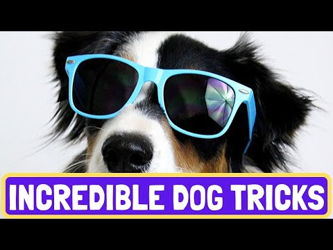 Incredible Dog Tricks Featuring Terra the Australian Shepherd