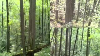 ПИЗДЕЦ,Герои,жизнь,свобода,секс с лесом