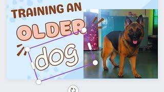 Dog training in ambala