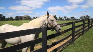 Old Friends Virtual Tour - Silver Charm