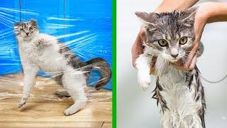 ¡14 Trucos Para Gatos!