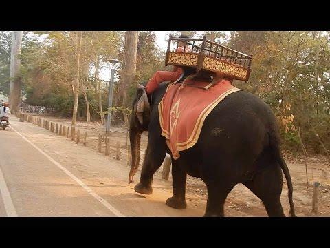 Elephant Angkor Thom Temple Tour Cambodia