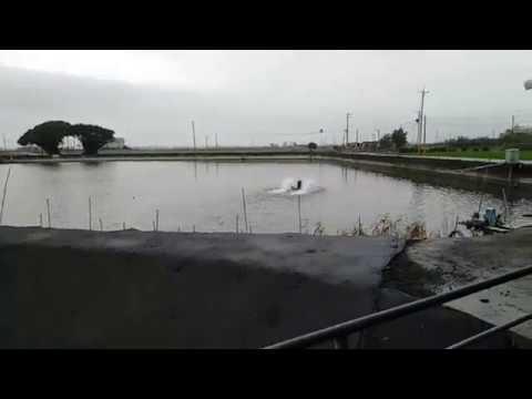 布袋榕樹下阿瑞戶外釣蝦場 - YouTube