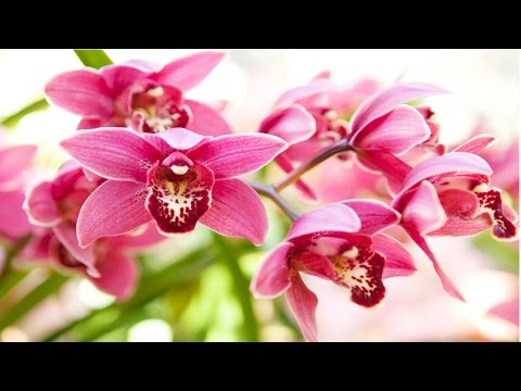 Curso Cultivo de Orquídeas - Orquídeas