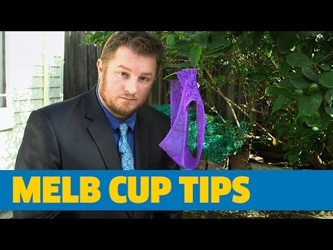 Melbourne Cup Tips 2016 - Sportsbet Undies