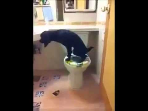 Einkluger Hund