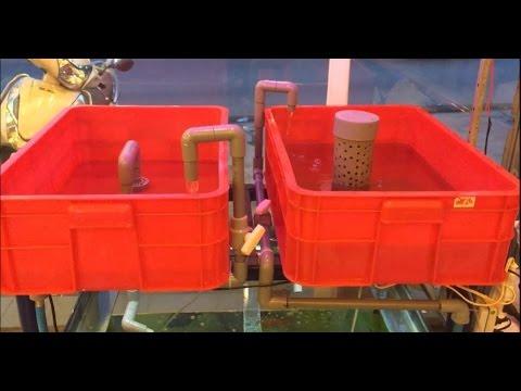 Hướng dẫn làm hệ thống Aquaponics Bell-siphon & U-siphon