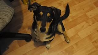Пенза щенок собака ищет дом в добрые руки волонтеры животные PC190042