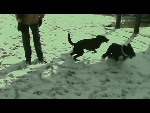 Normal Dog Play Behavior