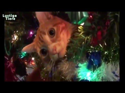 lustige katzen angriff auf weihnachtsbaum katzen. Black Bedroom Furniture Sets. Home Design Ideas