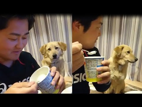 CUTE  Dog is shy to aks for food| Funny pets video Compilation