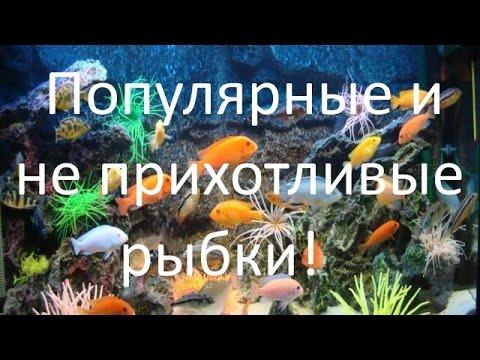 Популярные и неприхотливые аквариумные рыбки для начинающих аквариумистов! [#Аквариумные рыбки]