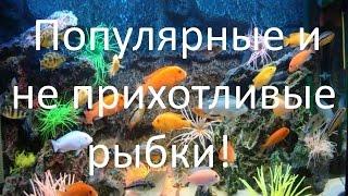 Популярные и неприхотливые аквариумные рыбки для начинающих аквариумистов! [#Аквариумные рыбки](Популярные и неприхотливые рыбки это те рыбки которые показаны в этом видео для наглядности! Конечно же..., 2015-01-05T20:59:36.000Z)