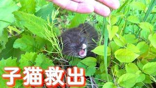 Rescata al gatito en el campo, luego ...
