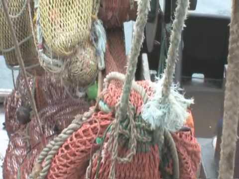 Oregon Fisheries Crab And Shrimp