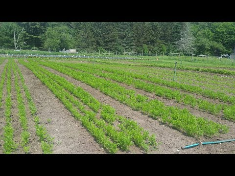 3 Tips for Beginning Farmers from Conor Crickmore of Neversink Farm