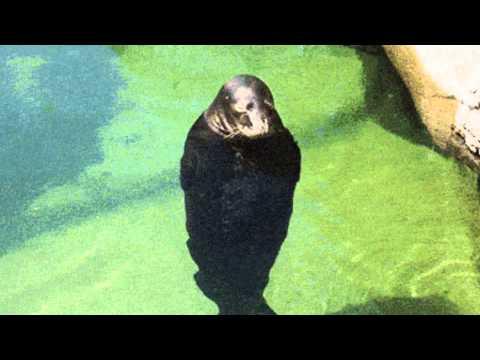 Spinning Seal - GifSound