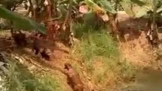 Anjing yang pintar funny dog