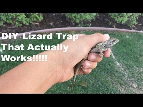 DIY Lizard Trap That Actually Works!!!!!