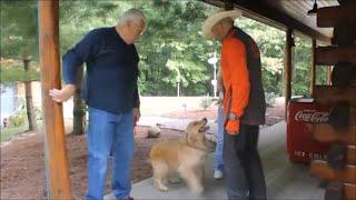 Golden Retriever Attacks Dog Whisperer Big Chuck Mcbride With Love