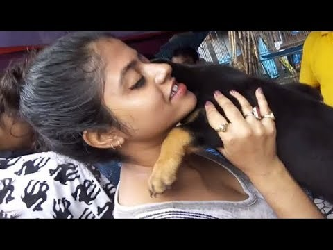 Beautiful Girl Get Her Favourite Cute Rottweiler Puppy at Galiff Street l together