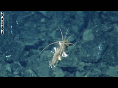 حيوان بحري غريب تحركه مراوح في قاع البحر