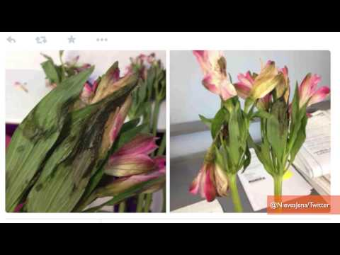 1-800-Flowers Botches Valentine's Day Deliveries