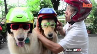 Anjing di Surabaya masuk berita luar negeri
