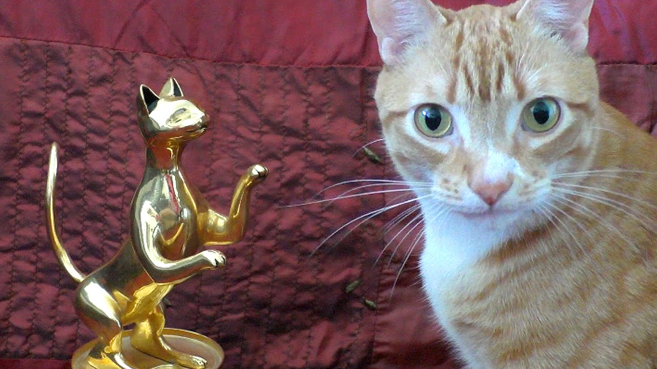 If Your Cats Won Movie Awards