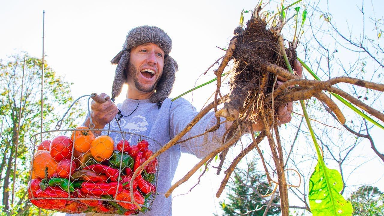 Download EPIC November Garden Harvest, Backyard Food Forest Gardening