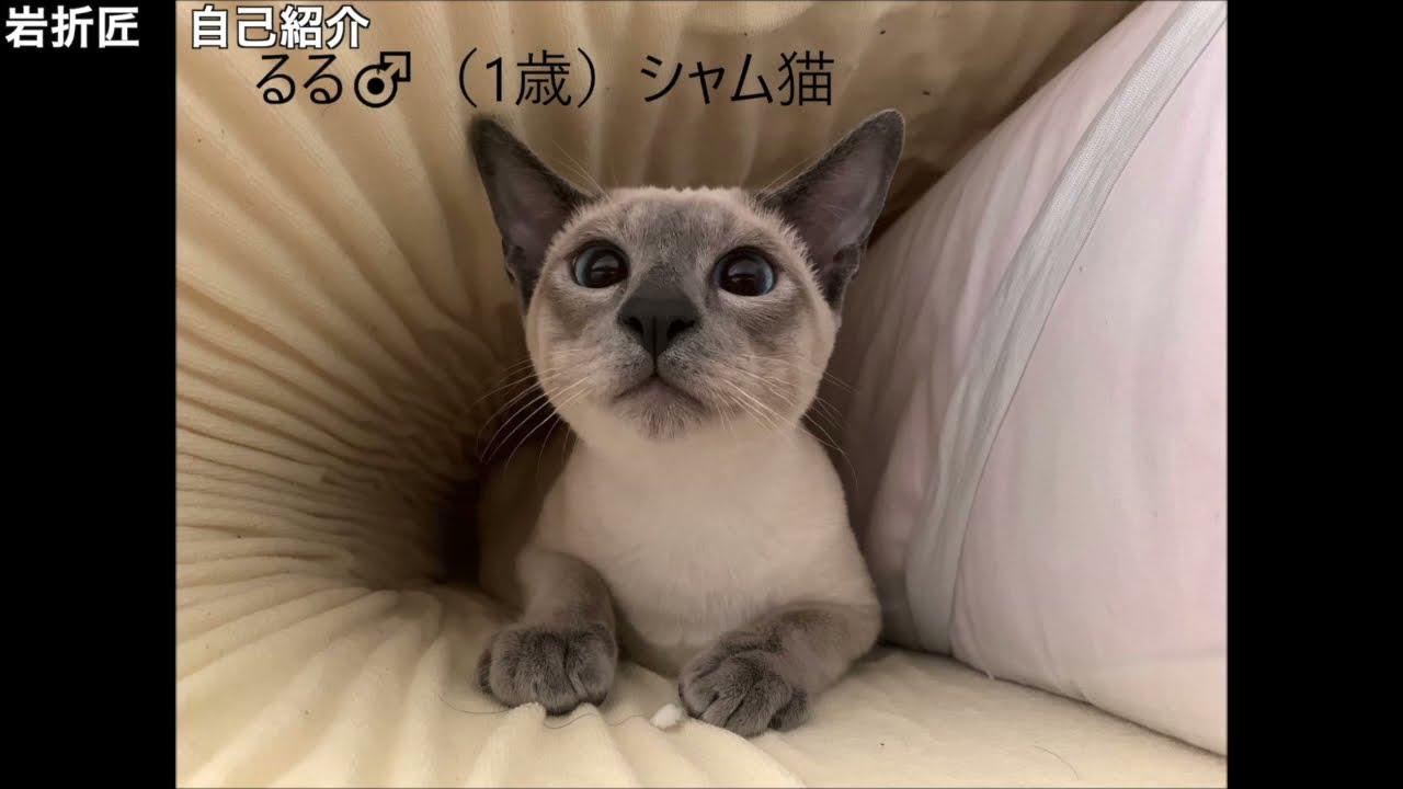 片桐研究室紹介ビデオNo.15