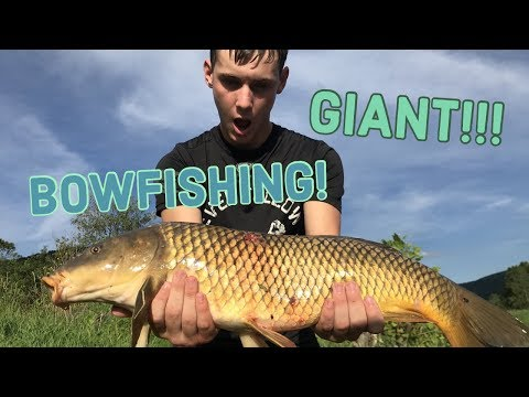 BOWFISHING GIANT Carp In Pennsylvania!!!