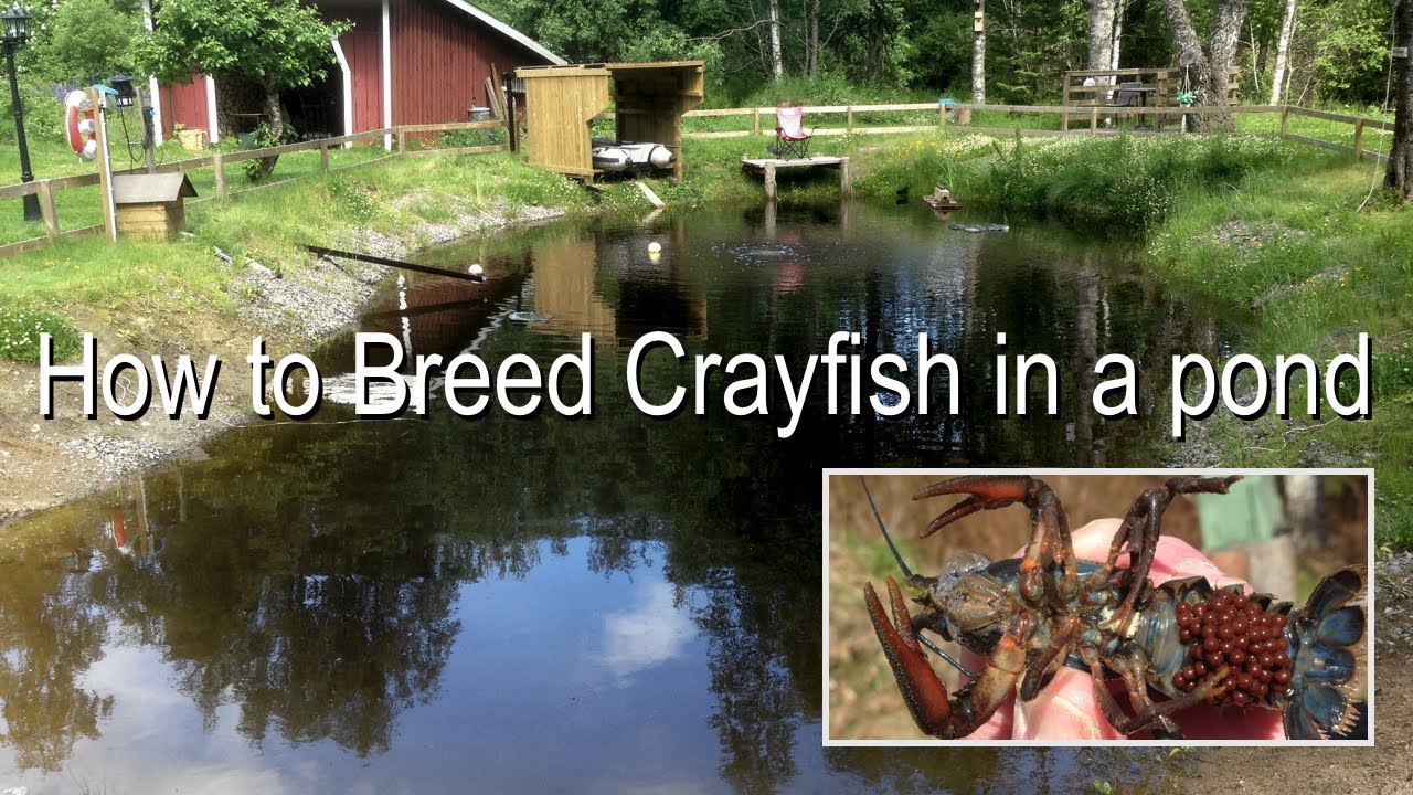 how to stop mosquitoes breeding in pond