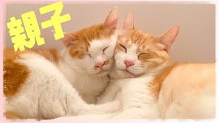 顔くっつけて寝る親子猫可愛すぎるけど寝違えそうだよねそれ