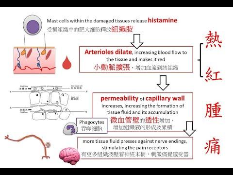 DSE Bio 炎性反應 Inflammatory Responses