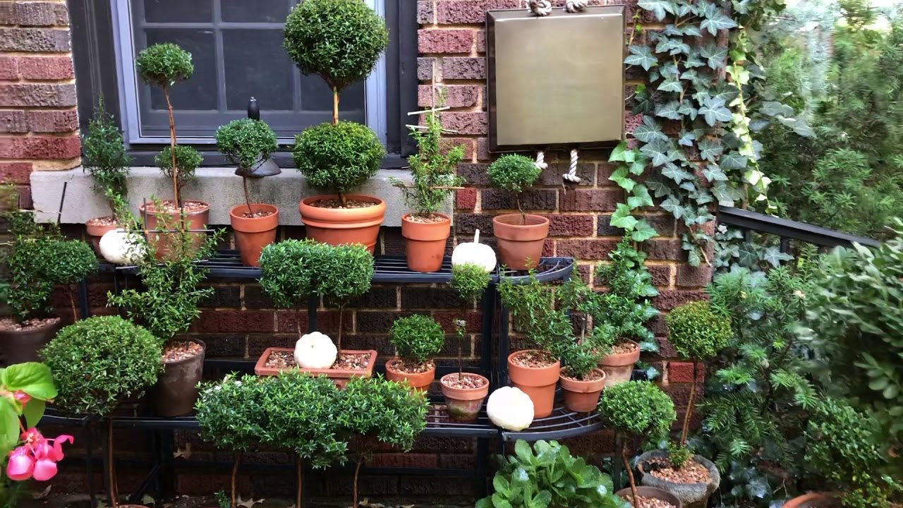 Myrtle Topiary Care Tips Before Bringing Inside Youtube