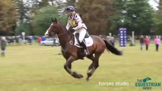 Кросс на лошади, конный спорт, верховая езда, Sia The Greatest