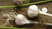 Лук-севок, семя лука, лук, лук севок озимый, озимый лук, семена овощей, севок, голландский лук севок арбажейка, лук севок и посадочный чеснок, семена professional · лук-севок со скидкой · лук-севок оптом. Другие страны. Лук-севок в россии. Показать сначала: по рейтингу. Дешевые · дорогие.