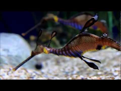Sea Dragons and Seahorses