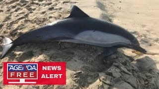 Dolphin Shot Dead in California - LIVE COVERAGE
