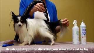 Grooming with Chris Christensen Precious Drop Keratin Spray for Drop Coats