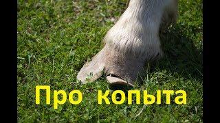 Уход за ногами лошади - нужен или нет и почему.