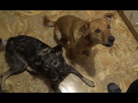Как НЕ НАДО дрессировать собак! :)))