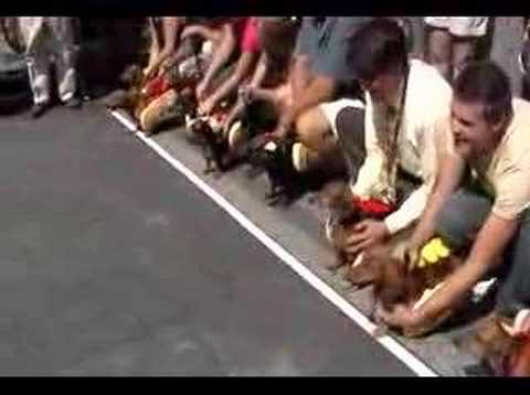 Running of the Wieners - Wiener Dog Race