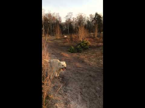 Superlieve Baltimore zoekt een baasje - ter adoptie via Spaanse honden in nood (www.ace-charity.org)