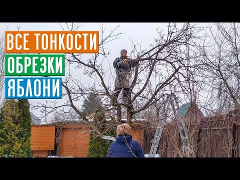 СЕЗОН 2020: ОБРЕЗКА ЯБЛОНИ - КАК ЭТО ДЕЛАЮТ ПРОФЕССИОНАЛЫ! Теперь все понятно!!! / Садовый гид
