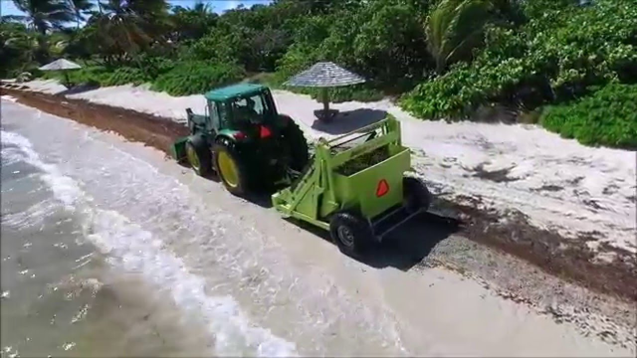 Caribbean Sargum Cleanup With The Barber Surf Rake Beach Cleaner