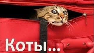 Коты. Любителям кошек посвящается. Фото забавных котов.