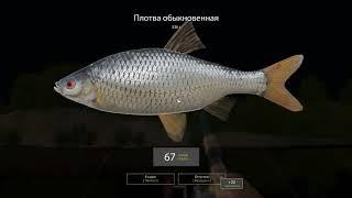 Русская рыбалка 4 - река Вьюнок - Фарм 2 Все подряд в садок